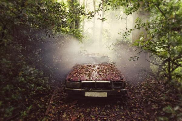 Jaguar © Gina Soden